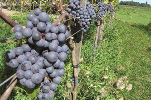 Wijngoed Montferland