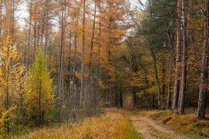 bijzondere bossen en natuur Montferland