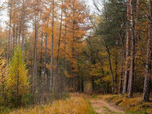 natuurwandelingen montferland