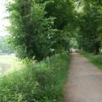 bos en natuur camping