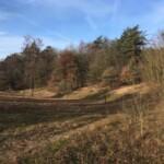 scouting bushcraft gelderland