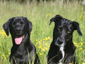 honden op camping brockhausen