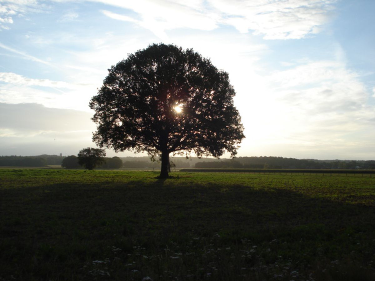 omgeving montferland brockhausen