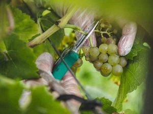 wijngaard montferland